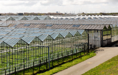 Biomass for horticulture - Glasshouses and growers