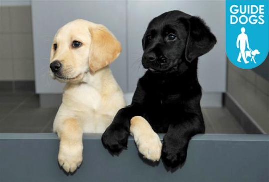 Oohs & aahs at Guide Dog charity biomass Talk & Tour
