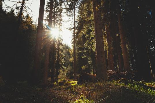 Biomass Emissions - Regulations and Legislation